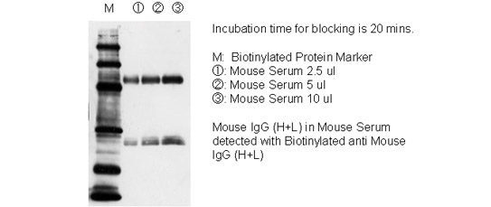 Incubation time for blocking is 20 mins.