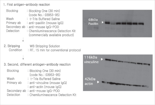1. First antigen-antibody reaction