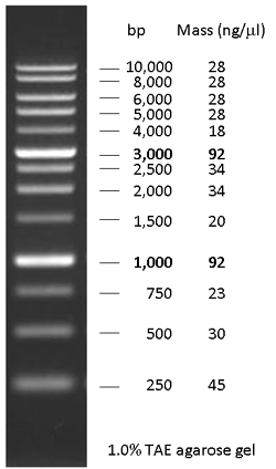 Nacalai Usa Inc Product Dna Ladder