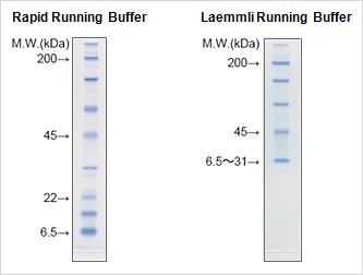 Rapid Running Buffer / Laemmli Running Buffer